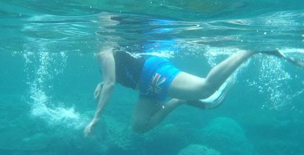 Gaya berenang anjing